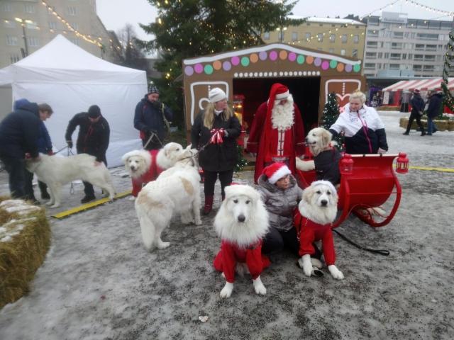 Joulukylässa koiria.